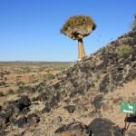 klipspringer-challenge-trail-run